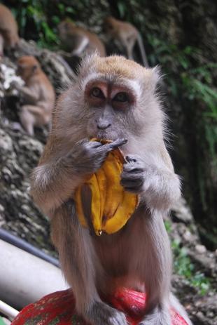 No monkey busniess