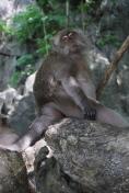 Monkey beach