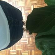 VFTT 124 Leaf me Alone.