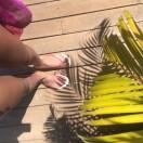VFTT 92 Bali Palms